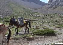Festival Tours of Tibet